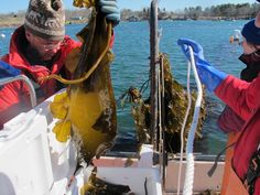 A growing cadre of entrepreneurs think seaweed could help Maine lead a new revolution in American farming.