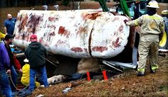 Yell County Mounted Patrol rescue trapped horse from overturned trailer - great photos and detailed information on the wreck and extrication.
