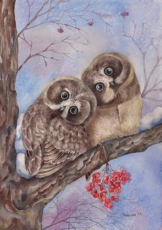 VERY RARE Owls on mountain ash birds by Plovetskaya Russian modern postcard Owl Photos, Owl Pictures, Owl Bird, Bird Art, Owl Illustration, Illustrations, Owl Artwork, Whimsical Owl, Paper Owls