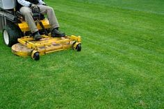 Spring Lawn Care & Maintenance Tips