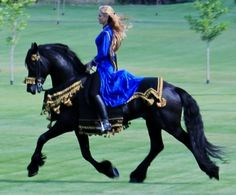 "Apollo, Ster Friesian Stallion ""What Dreams Are Made Of"""