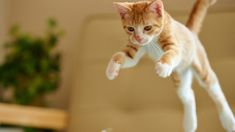 Uncatlike Cats Compilation. Kitty Mishaps.  - http://allkitties247.com/uncategorized/uncatlike-cats-compilation-kitty-mishaps/