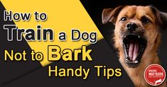 How to Train a Dog Not to Bark – Handy Tips Many people go out and get a dog only to find that there are problems attached to it – barking is one of the most common problems a dog may have. Mind you, just because a dog has a problem, this doesn't mean you need to get. #dogtrainingbarking