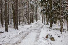 Det kom lite snö i förra veckan! Hoppas fortfarande på en vit jul! #bestoftheday #bestofscandinavia #igscandinavia #scandinavia #ig_nature #linköping #ryd #rydsskogen #canon5dmarkiv #nordic #meralink #snö #vinter #winter #winteriscoming