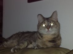 Alien kitty
