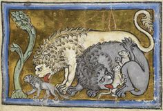 Detail of a miniature of cubs born dead and reanimated by their fathers who breathe life into them, in the Bestiary, England (?North or Central), c. 1200–c. 1210, Royal MS 12 C XIX, f. 6r