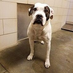 3-3-18, MARTY, Wintersville, OH, HURRY! Can be killed at any moment!! ...who needs a loving home.