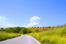Panorama con strada fiori gialli e papaveri Su #fotolia #microstockphotographs #microstockphotowebsite #microstockphotography #microstockphotowebsites #marketingonline #microstock #marketing #webdesign #design #designaneolife #ecommerceur #fastudio #SEO #web2014 #job #csstemplates #css #html #html5 #html5css3 #Websites #road