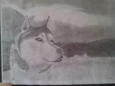 I drew this husky during the beginning of the school year (2013-2014) and I love it so much XD