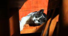 A cute, sleepy cat in warm sunlight #healthytreefrog