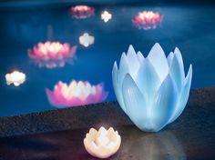 #piscine #bougies #flottantes #lotus #rose #bleu #photophore