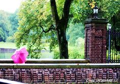 Pink Umbrella Eva in Westerholt ,Germany