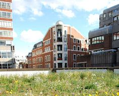 A green roof made by Optigreen, the professional roof greening company