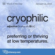 Dictionary.com's Word of the Day - cryophilic - preferring or thriving at low temperatures.
