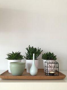 LAworldwide Planter Pots, Dressing, Profile