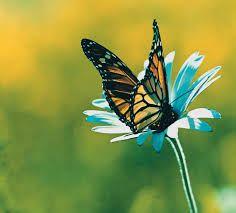 quello che il bruco chiama fine del mondo il resto del mondo chiama farfalla - Cerca con Google