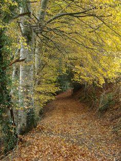 Sentier d'automne - Alrance