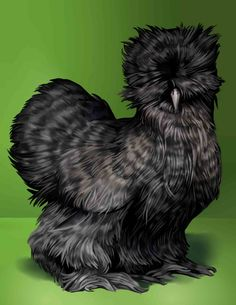 Amber Waves Bearded Bantam Silkies: Cuckoo Silkies