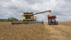 As boas condições climáticas favoreceram o avanço dos trabalhos, que estão adiantados em relação ao ano passado