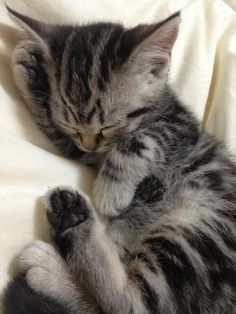He's So Sleppy | Cutest Paw