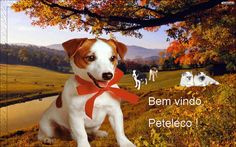 Os cães são o nosso elo com o paraíso. Eles não conhecem a maldade, a inveja ou o descontentamento. Sentar-se com um cão ao pé de uma colina numa linda tarde, é voltar ao Éden onde ficar sem fazer nada não era tédio, era paz.   Milan Kundera