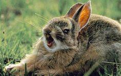DataLife Engine Версия для печати Смешные стоп-кадры с животными (30 )