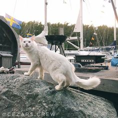 Midsummer is a big day in Sweden and there is no better way to celebrate it than on a boat at the archipelago of Stockholm We would also like to take the opportunity to thank the hosts Emilie and Linus for inviting us Likewise the rest of the company for an amazing midsummer's eve . . The #travellingcat tries #boatlife on #bamsekryssaren in #stockholm #archipelago #norrviken #runmarö  . . . . . Follow hashtag #cezarscrew to keep up with the adventure of the most well travellerdcat in the…
