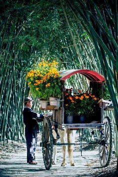 Farmer with flowers going to the market, Saigon, Vietnam