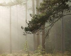 Die Kraft des Meeres und die Stille des Waldes › kwerfeldein - Fotografie Magazin |  Fotocommunity