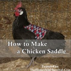 The Homestead Survival | How to Make a Chicken Saddle | Homesteading - Raising Chickens - http://thehomesteadsurvival.com