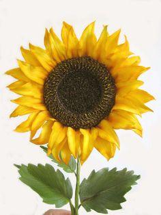 gumpaste sunflower by sugar art studio, via Flickr