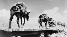 Mountain troops in training with pack mules, 1942