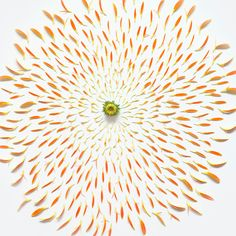 Exploded, dissected flowers - like fireworks.
