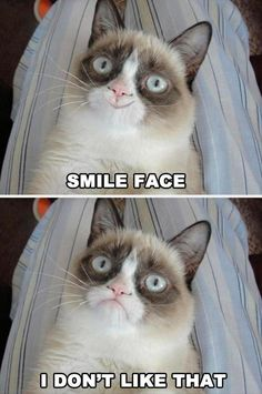 grumpy cat, smile face.... gawd I want this cat!!!!!!!!!!!!!!!!!