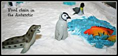 world animal day_southpole_food chain