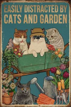 Crazy Cat Lady, Crazy Cats, Art And Illustration, Illustrations, Animals And Pets, Cute Animals, Cat Posters, Vintage Cat, Cats And Kittens