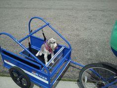 pupRUNNERS® | Photos | Dog Bicycle Trailer