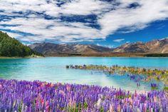 Lago Tekapo, Nuova Zelanda