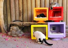 A Colorful Backyard Cat Apartment Made from Recycled Computer Monitors — Miki's…
