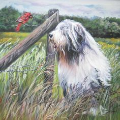 Bearded collie art print CANVAS print of LA Shepard by TheDogLover, $39.99