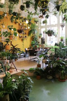 Room With Plants, House Plants Decor, Plants In Living Room, Plant Rooms, Living Rooms, Indoor Garden, Indoor Plants, Home And Garden, Garden Shop
