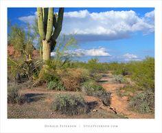 Saguaro cactus, Papago Park, Phoenix, Arizona
