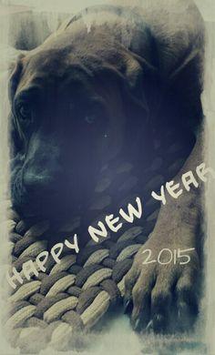 Happy new year _ mastiff