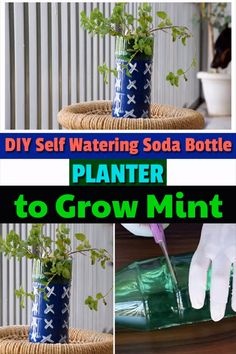 DIY Self Watering Soda Bottle Planter to Grow Mint DIY Self Watering Soda Bottle Planter to Grow Mint Sherin woods DIY planters Create this DIY Self Watering planter nbsp hellip videos balkon Self Watering Bottle, Diy Self Watering Planter, Growing Vegetables In Pots, Growing Herbs, Hydroponic Gardening, Container Gardening, Balcony Gardening, Balcony Plants, Hydroponics System