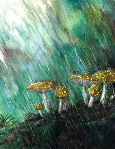 -rain-splashing-down-on-mushrooms.jpg