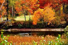 Colored Leaves, New Brunswick, Scenery, Canada, Painting, Art, Art Background, Landscape, Painting Art