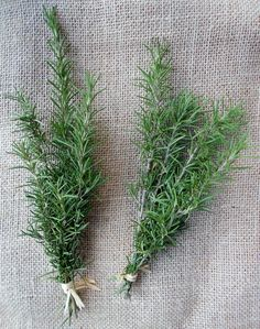 Organic Fresh Rosemary Cuttings Sprigs Recipes by MagnoliaManor