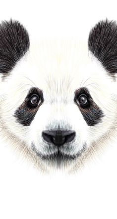 Cute, funny wallpaper for iphone or android Cute Panda Wallpaper, Funny Iphone Wallpaper, Animal Wallpaper, Wallpaper Backgrounds, Panda Sketch, Panda Drawing, Panda Background, Baby Animals, Cute Animals