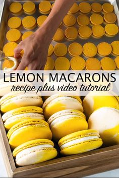 Lemon Macarons using the Swiss method, filled with lemon buttercream and lemon curd! Check out the full video tutorial o French Macaroon Recipes, French Macaroons, French Macaron Filling, Macarons Filling Recipe, How To Make Macaroons, Making Macarons, Italian Macarons, Lemon Recipes, Baking Recipes