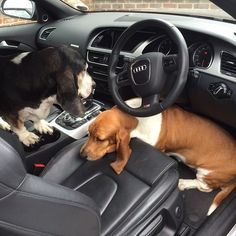 5 minute drive, 10 minutes to get them to sit where they're supposed to sit...true story